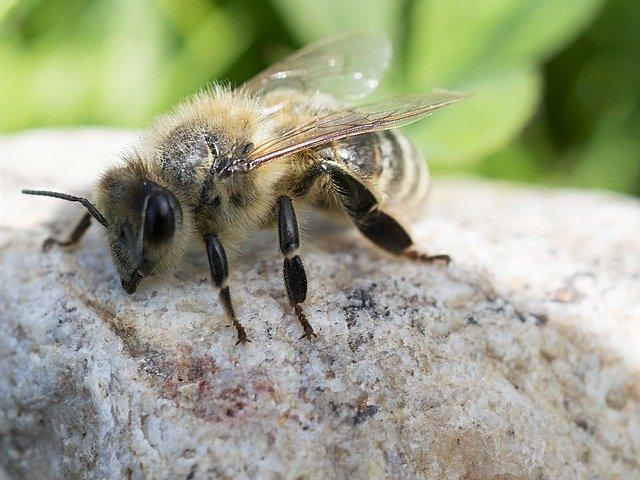 včela na sluníčku