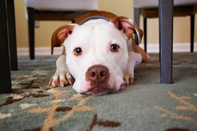 pes pod stolem